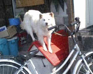犬小屋の上の犬