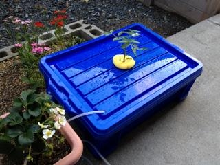 水耕栽培装置 外観