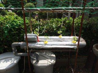 水耕栽培装置全貌